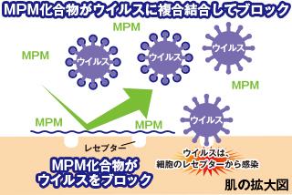 MNM化合物がウイルスに複合結合してブロック